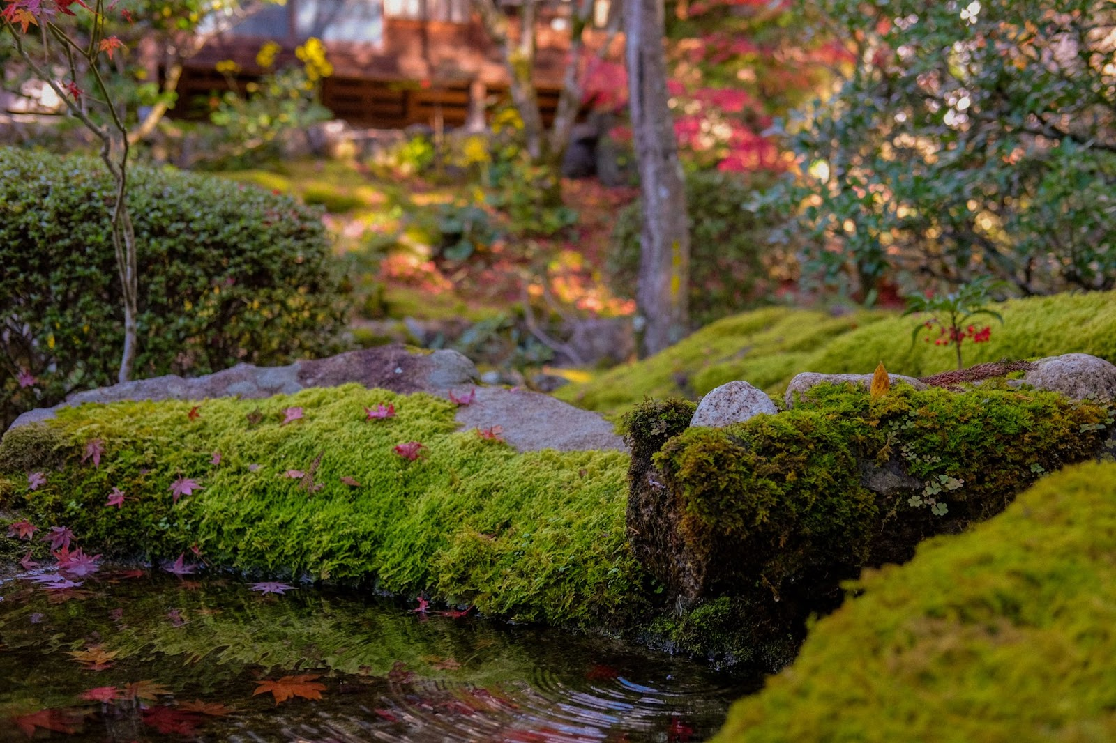 Earth Day Landscaping Tips Plants Minneapolis